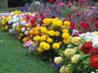 Flowers Segovia by GoddessKairi