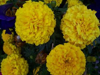 Segovia's Flowers Again xD by GoddessKairi