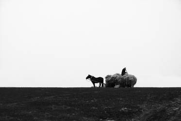 Scent of hay by shumski