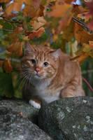 Autumn Shogo by BlastOButter