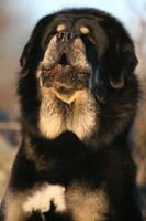I can bark all day long by BlastOButter