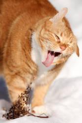 Razor tongue by BlastOButter