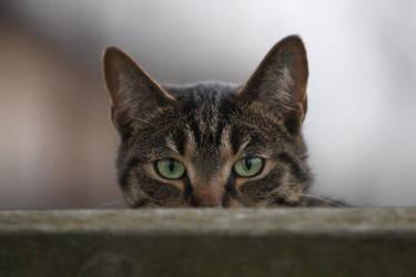 Peeking over the fence by BlastOButter