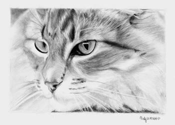 CAT. by crazyemm