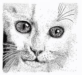 Dot dot dot dot dot... cat. by crazyemm