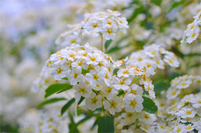 Beautiful flower by MamaMika
