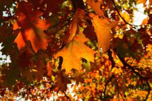 Magical autumn by MamaMika