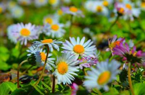 Beautiful flowers by MamaMika
