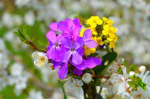 Beautiful spring... by MamaMika