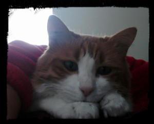 kathe-cat's Profile Picture
