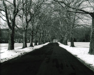Lonely Road by DigitalPerception