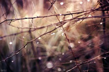 rainy day by vularia