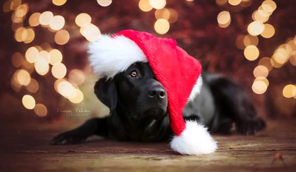 Christmas Ahri by vularia