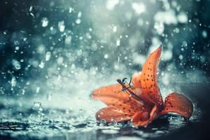 splash by vularia