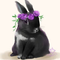 :Lennon The Bunny: by PrePAWSterous