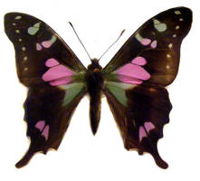 moths and butterflies stock 88 by hatestock
