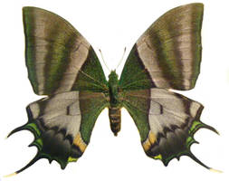 moths and butterflies stock 89 by hatestock