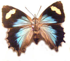 moths and butterflies stock100 by hatestock