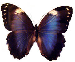 moths and butterflies stock123 by hatestock