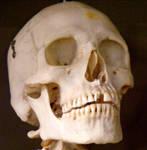 Skeleton Stock 30 by hatestock