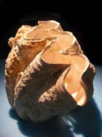 shell stock 66 by hatestock