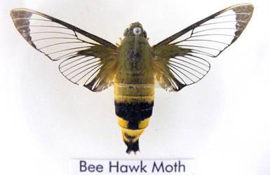 Bug stock 76 by hatestock