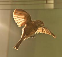 Bird Stock 26 by hatestock