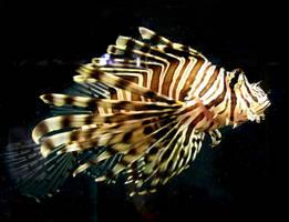 Aqwa stock Lionfish 5 by hatestock