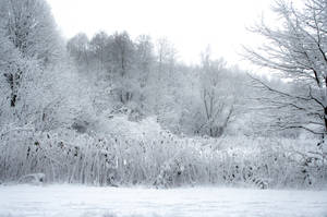 Winterscape 01 by CD-STOCK by CD-STOCK
