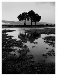 zambezi by alanc79