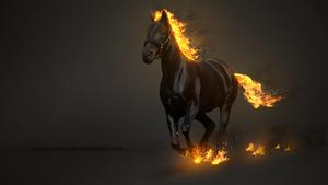 Horse by pavoldvorsky