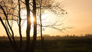 Sunlight Silhouettes by Danimatie