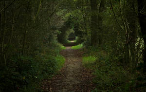 Forest Trail by Danimatie