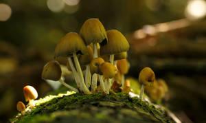 Mushrooms on a Fallen Tree by Danimatie