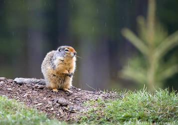 Sitting In The Rain by Dani-Lefrancois