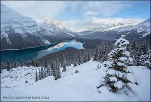 Snowy Peyto by Dani-Lefrancois