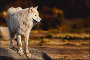 Novembersun by wolfenphotography
