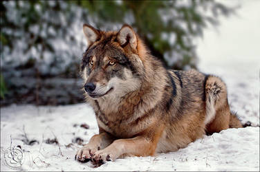 Taking A Break by wolfenphotography