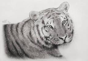 Tiger portrait by Lylenn