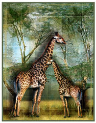 Giraffes by buddygirlgreetings