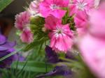 Flowers by zu-san