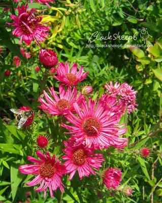 In Bloom by BlackSheep6