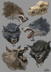 Wolfstudy 15 01 15 by Andy-Butnariu