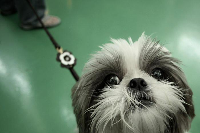 Cute Prisoner by pandashekki