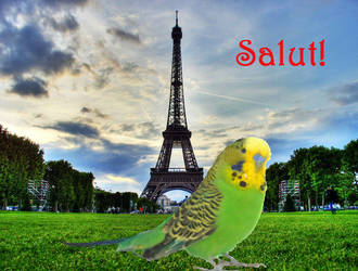Budgie in Paris by Evanescent-beauty