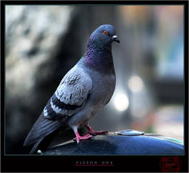 Pigeon One v.2 by mesondecay