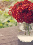 Red Yarrow by ViciousCircle-7