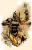 Wolverine colored by johnbecaro