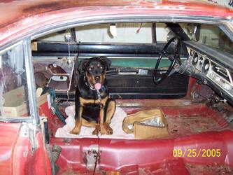 Junkyard Dog by Specter-8472
