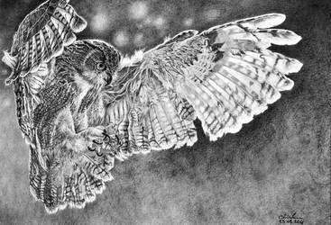 Owl Hanting by GiovanniChis